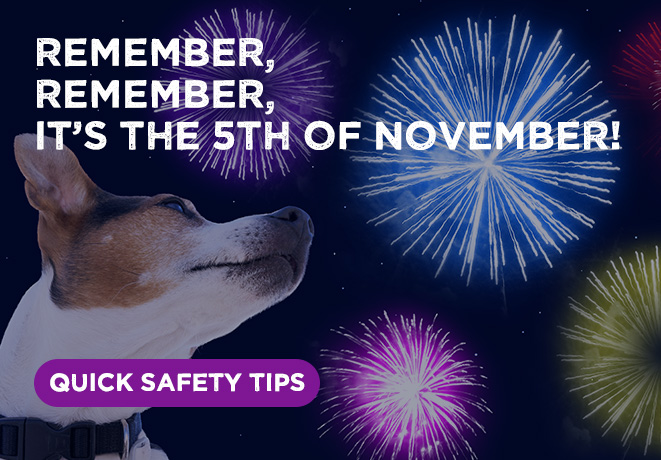 Fireworks Night Pet safety